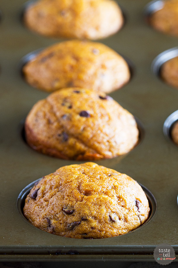 Looking for a simple, no-brainer pumpkin chocolate chip muffin recipe? These Easy Pumpkin Muffins with Chocolate Chips are filled with spice and pumpkin flavor, and can probably be made from ingredients in your pantry!