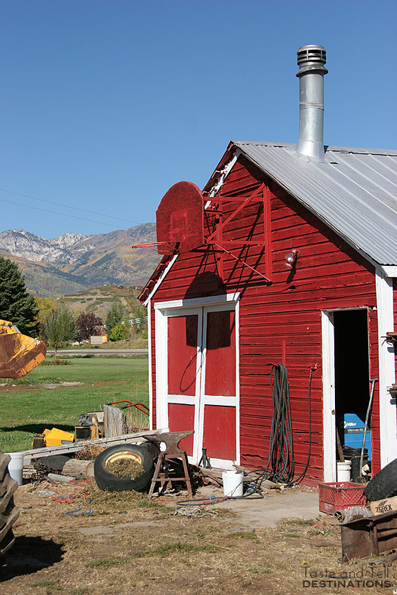 Heber Valley Milk & Heber Valley Cheese | Taste and Tell #utah #dairyfarm