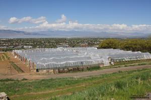 La Nay Ferme - Provo, Utah | www.tasteandtellblog.com