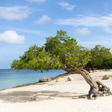 Aruba video - what to do on the One Happy Island.