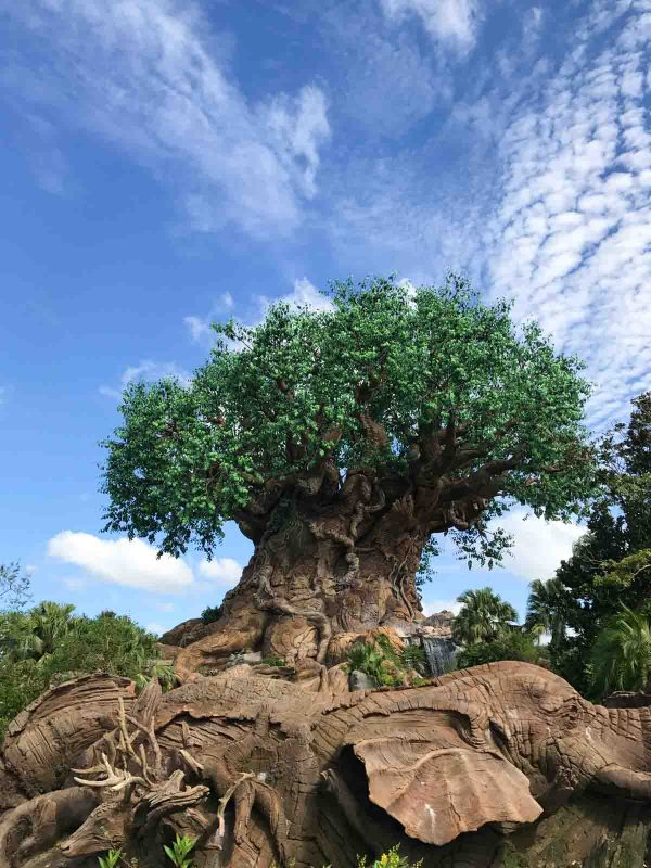 Tree of Life at Animal Kingdom - Disney World