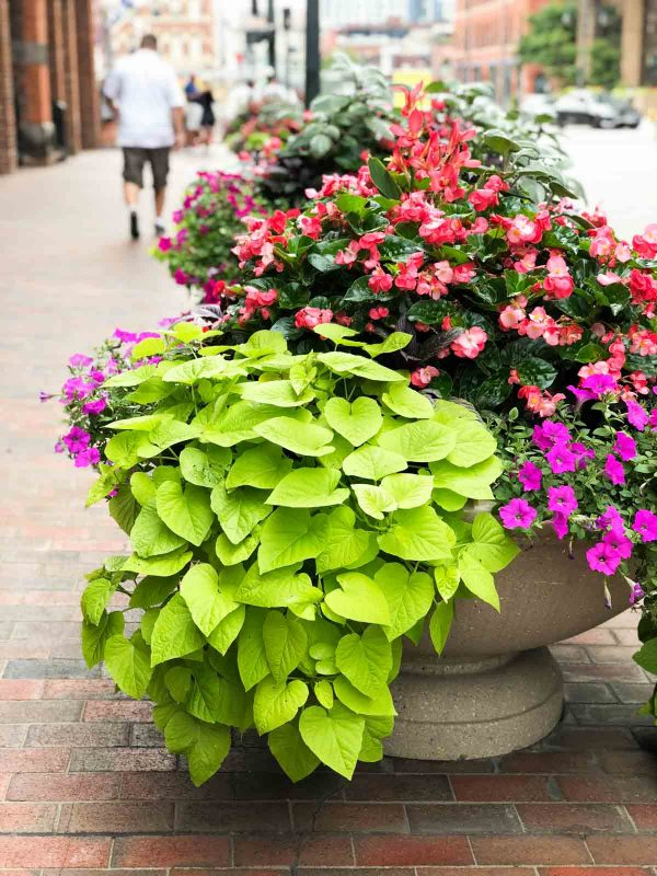 Flower planter in downtown Denver, Colorado