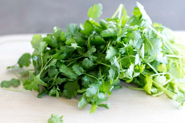 cilantro for Creamy Cilantro Chile Tacos