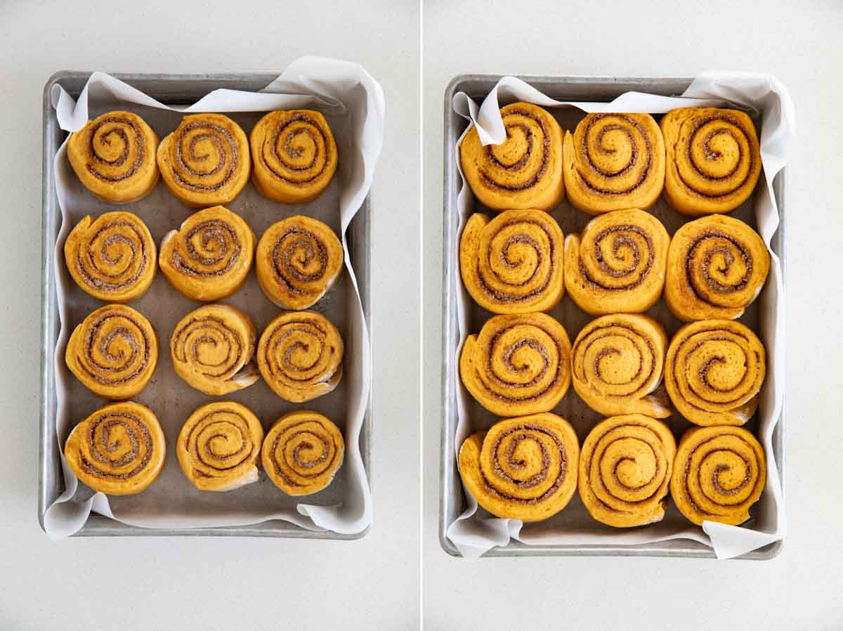 showing the size difference of risen pumpkin cinnamon rolls